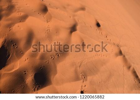 Sossusvlei, Namibia 2018 #1220065882