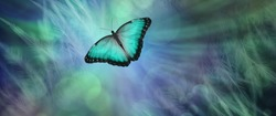Soul Release Metaphor for departing soul - lone jade green  coloured butterfly set against a radiating feathered bokeh green and blue  coloured background