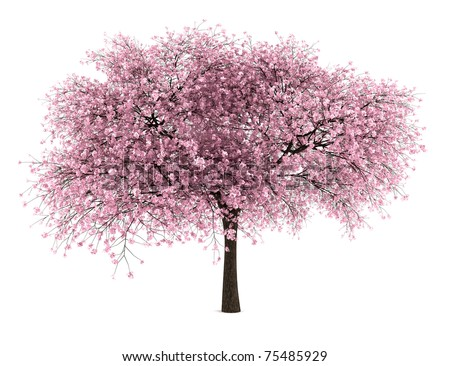 sour cherry tree isolated on white background Stock photo ©