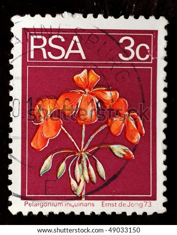 SOUTH AFRICA - CIRCA 1973: A 3 cent stamps shows iamge of scarlet geraniums (Pelargonium inquinans), circa 1973