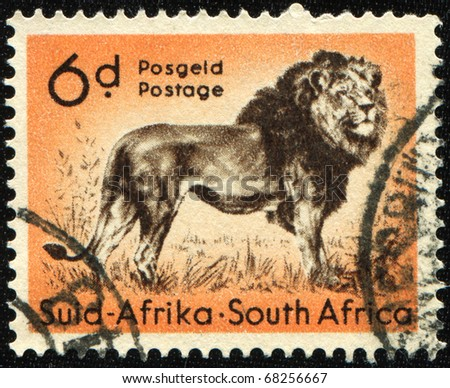 SOUTH AFRICA - CIRCA 1958: A stamp printed in South Africa shows lion, circa 1958