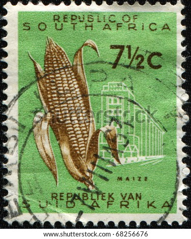 SOUTH AFRICA - CIRCA 1953: A stamp printed in South Africa shows maize, circa 1953