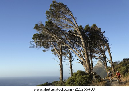 South Africa, couple cycling along tree-lined mountain path, rear view, sea in background