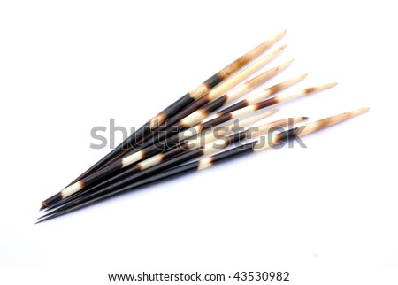 South African black and white porcupine quills. Image isolated on white studio background.