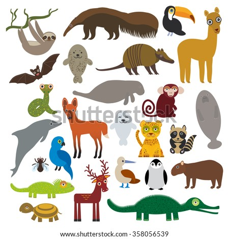 South America sloth anteater toucan lama bat fur seal armadillo boa manatee monkey dolphin Maned wolf raccoon Hyacinth macaw lizard turtle crocodile deer penguin Blue-footed booby Capybara.  #358056539
