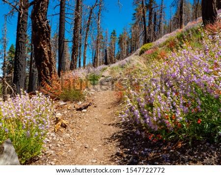 South Fork Trail. Mountain Trail. Trail to Dry Lake. San Bernardino Mountains