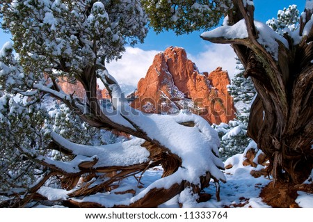 South Gateway Rock formation framed by Juniper Trees at the Garden of the Gods Park in Colorado Springs, Colorado with fresh fallen snow in early morning
