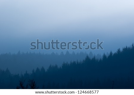 South german forest in the mist