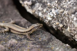 south german travel destinations brown lizard with stripe sitting on stone