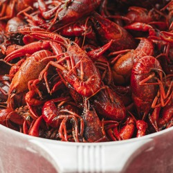 South Louisiana Crawfish. Boiled crawfish ready to eat. Mudbugs in a pot. Cooked crawdads in a bowl in Delcambre, Louisiana. Spicy cajun crawdads.