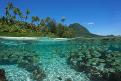 South Pacific island, shoal of fish underwater in the ocean and tropical coast, split view over-under water surface, French Polynesia, Huahine, Oceania