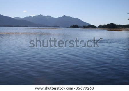 Southeast Alaskan landscape with sockeye salmon jumping out of the water