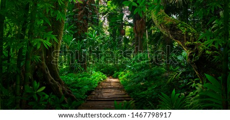 Southeast Asian tropical rainforest with path #1467798917