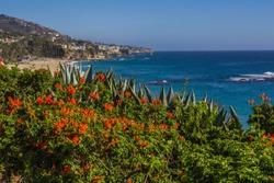 Southern California Native Plants frame Laguna Beach Coastline and Luxury Homes