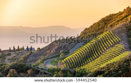 Southern California vineyards on a hillside, with hazy mountain background #594452540