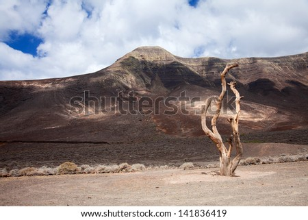 Southern Fuereteventura, Gran Valle, dry tree trunk sculpture along the footpath