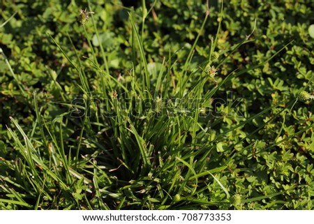 SOUTHERN LAWN WEEDS IN THE SUMMER  #708773353