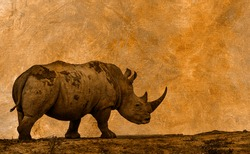 Southern white rhinoceros tracing multiple image with oil painting background ; Specie Ceratotherium simum simum family of Rhinocerotidae