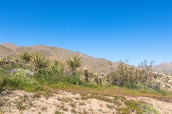 Southwest desert landscape with desert plants in springtime, camping, hiking and adventure in spring in american deset
