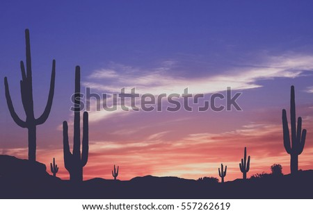 Southwest Desert - Vintage Colorful Sunset in Wild West Desert of Arizona with Cactus