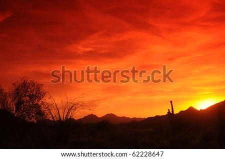 Southwestern Arizona Sunset with saguaro cactus and ocotillo