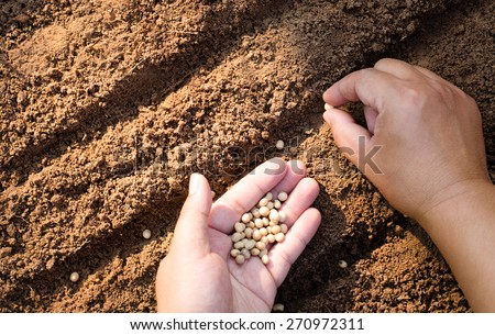 Sowing seed,Agriculture,Seed,Seeding,Seedling, Close up farmer hand sawing seed on back soil with sunlight background in morning time