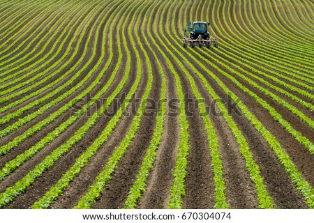 Soy bean row farm with a Tractor in Niseko Hokkaido Japan summer