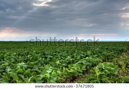 soy farm in Huron County, Ontario, Canada - stock photo