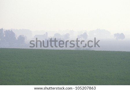 Soybean Field and Morning Fog, IN