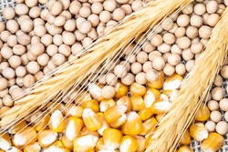 soybean, wheat and corn seeds in Brazil