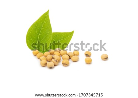 Soybean with leaf isolated on white background. Stock photo ©