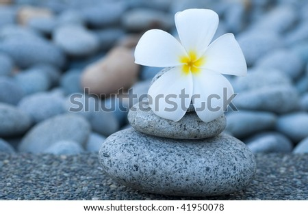 Spa and wellness. White frangipani and therapy stones.