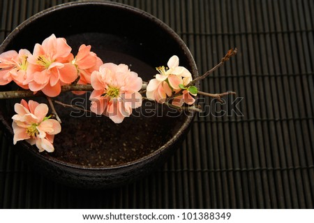 Spa Concept- bamboo grove and spring flower in bowl