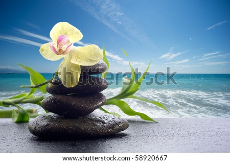 spa concept black stone with orchid on landscape background