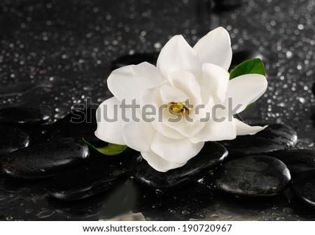 spa concept �gardenia flower