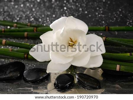 spa concept �gardenia flower with thin bamboo grove