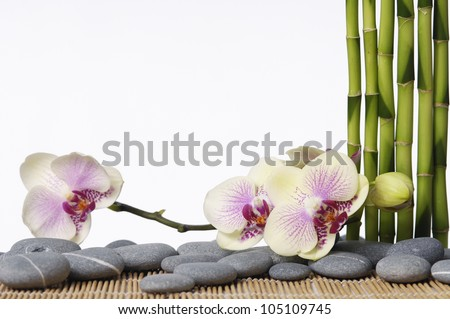 spa concept �set of thin bamboo grove with zen stones and orchid