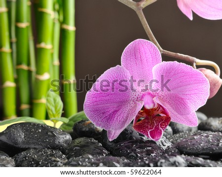 spa concept with orchid and black stones - stock photo