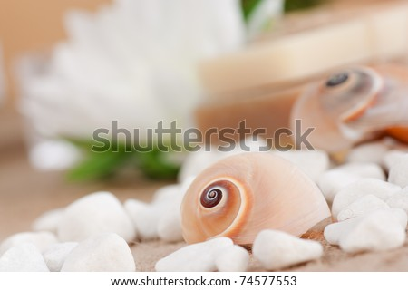 Spa setting with natural soaps and snail shell.