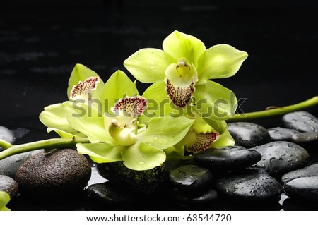 Spa still life with branch green orchid on pebble