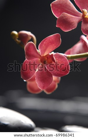 Spa still life with branch of red orchid with stones