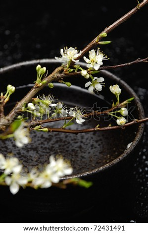 Spa still life with branch of white cherry blossom sakura in bowl