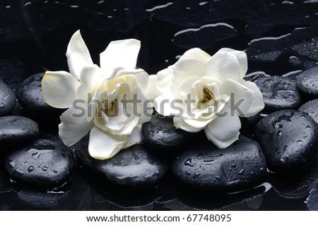 Spa still life with gardenia flower on pebble