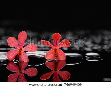 Spa still life with pebbles and red orchid