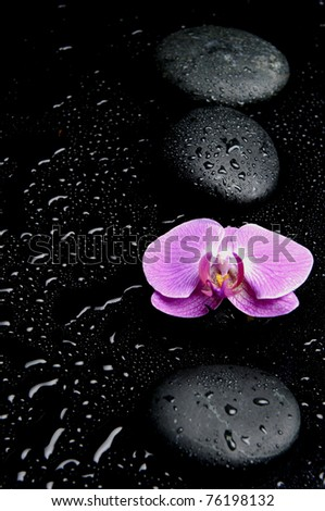 Spa Still life with pink orchid and row of stones
