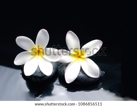 Spa still life with wet pebbles and two frangipani