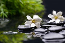 Spa still with gardenia flower and green plant on pebbles