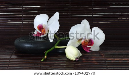 Spa Stones and Orchid Flower/Orchid and Stones/Orchid and Stones - stock photo