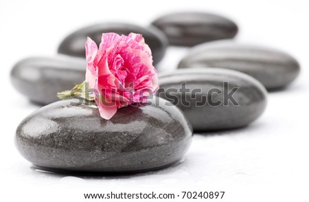 Spa stones with rose flower on a white background.