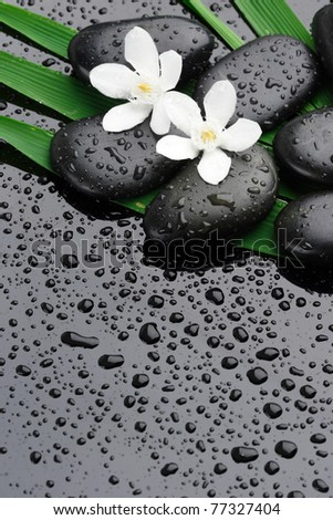 spa stones with water drops and flower  on black